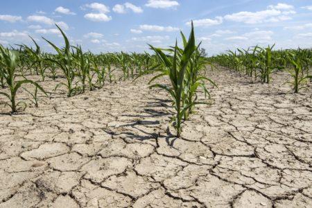 Seceta din aceasta vara ne va scumpi alimentele. Pretul la bursa pentru grau si porumb a explodat